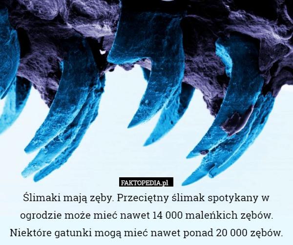 https://m.faktopedia.pl/uimages/services/faktopedia/i18n/pl_PL/201702/1487768591_by_Mudzina_500.jpg